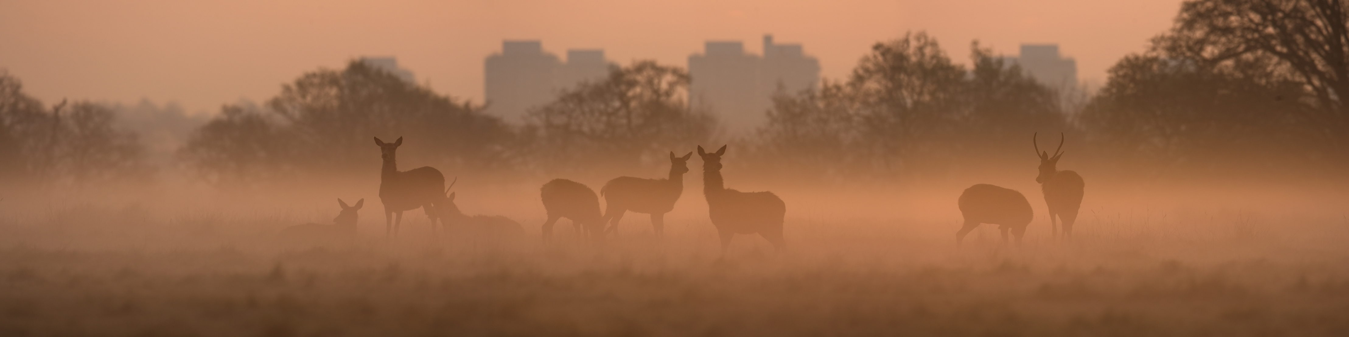 Deer and City - Photo © Graeme Purdy - iStock