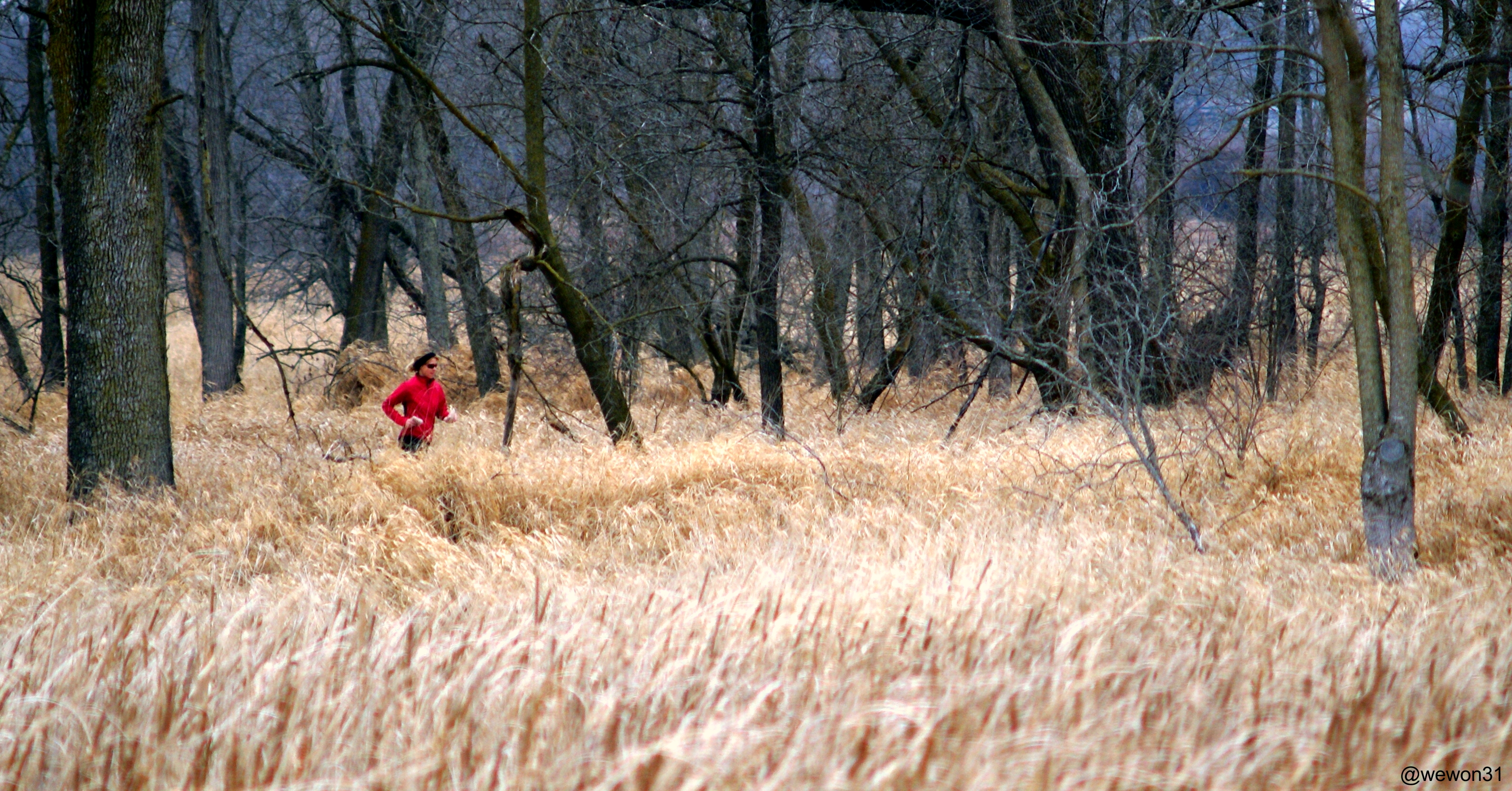 Trail runner in Brookfield Natural Area - Photo by @wewon31 (CC BY-ND 2.0)